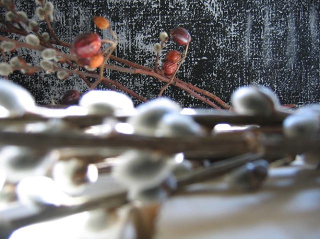 © Renate Egger. Herbarium Palmkätzchen, Hagebutte/Herbarium catkin, rose-hip. Installation, Fotografie/Installation, photography, 2008