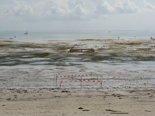 © Renate Egger. Paradies/Paradise. Absperrband, Holzstäbe/Barrier tape, wooden sticks. Installation, photography, video. Jambiani, Zanzibar, Tanzania, Africa 2011