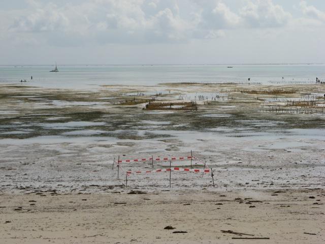 © Renate Egger. Paradies/Paradise. Absperrband, Holzstäbe/Barrier tape, wooden sticks. Installation, photography, video. Jambiani, Zanzibar, Tanzania, Africa 2011