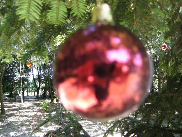 © Renate Egger. Christmas tree, 2011. Installation, Fotografie, Video/Installation, photography, video. Artfarm Pilastro. Pilastro di Bonavigo (VR), Italy