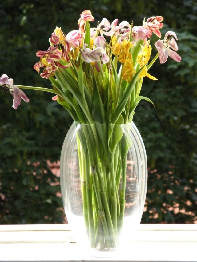 © Renate Egger. Herbarium Tulpen/Herbarium tulips. Installation, Fotografie/Installation, photography, 2011