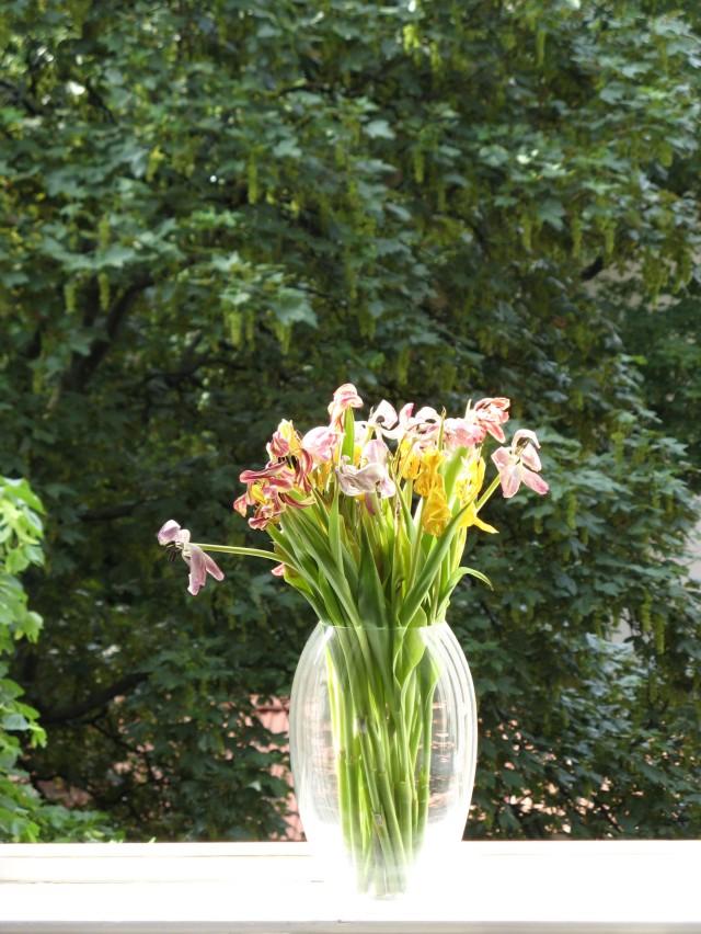 © Renate Egger. Herbarium Tulpen/Herbarium tulips, 2011. Installation, Fotografie/Installation, photography