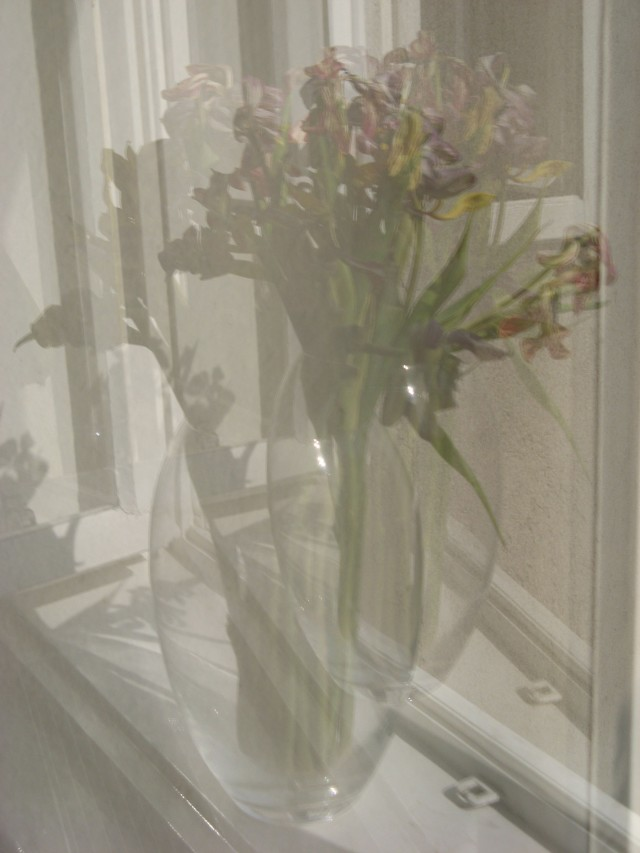 © Renate Egger. Spiegelung/Reflection. Tulpen/Tulips, 2011. Installation, photography