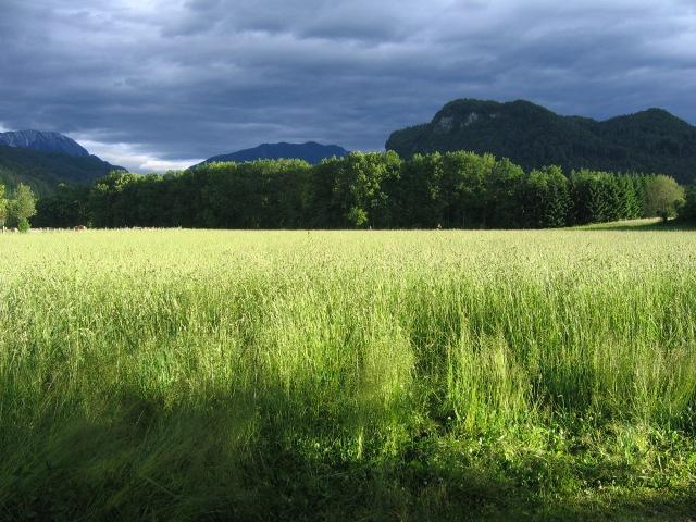© Renate Egger. Landschaft/Landscape, 2006
